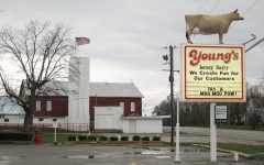 Young's Dairy attracts visitors with unique family experience
