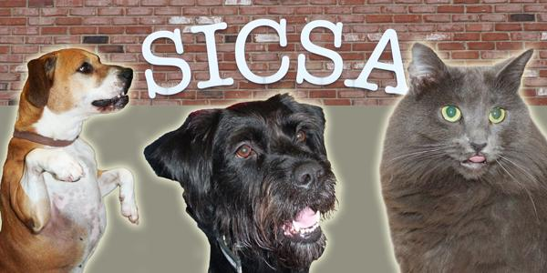 SICSA works to provide forever homes to deserving animals