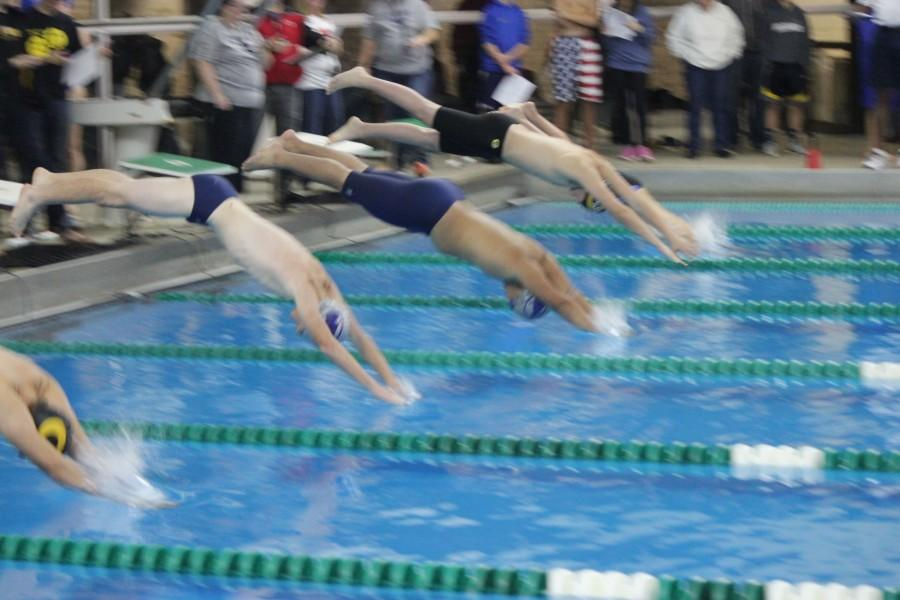 Two+Firebird+swimmers+begin+their+race+after+diving+intensely+off+the+block.